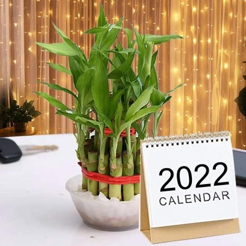 Aesthetic 2 Tier Bamboo Plant with LED Light