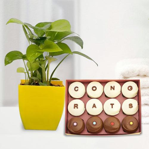 Elegant Gift of Money Plant with Homemade Chocolates