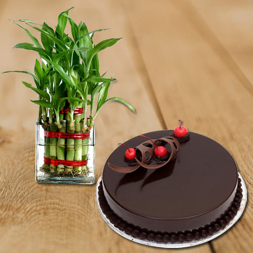 Premium Selection of Two Layer Bamboo Plant in Glass Pot with Chocolate Cake