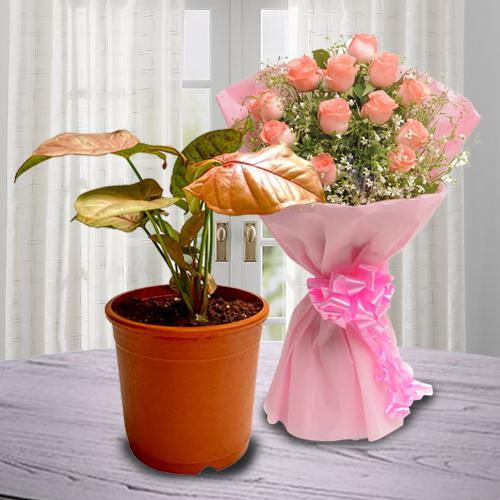 Evergreen Air Purifying Syngonium Plant with Rose Bouquet