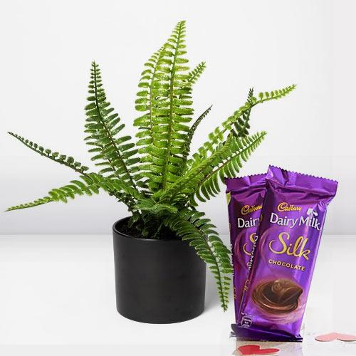 Heavenly Gift of Indoor Bostern Fern with Chocolates